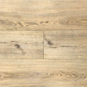 SPC 1507-5 Sandhill Oak